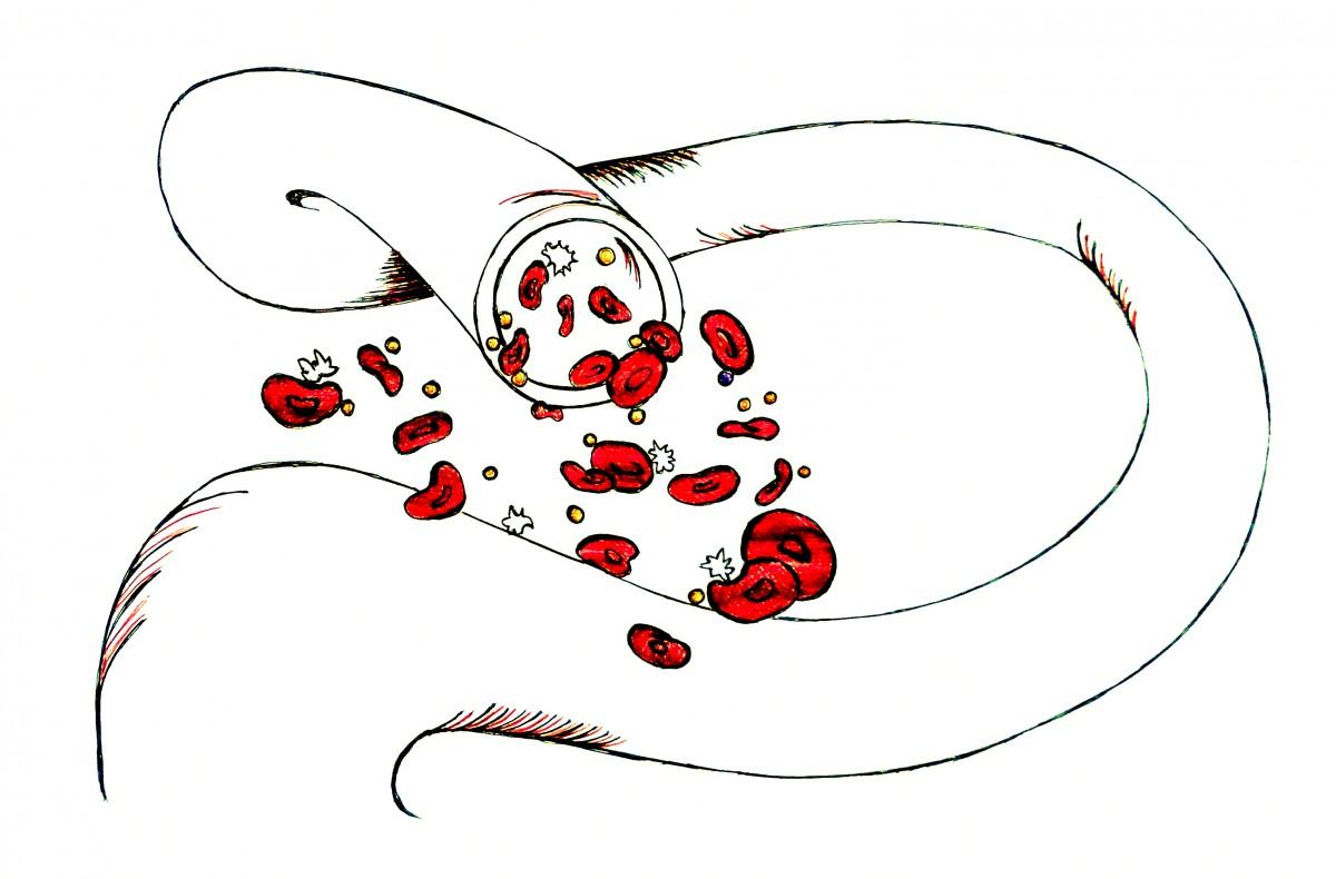 Raccolta cellule staminali da cordone: pro e contro